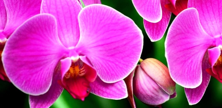 orchid_flower